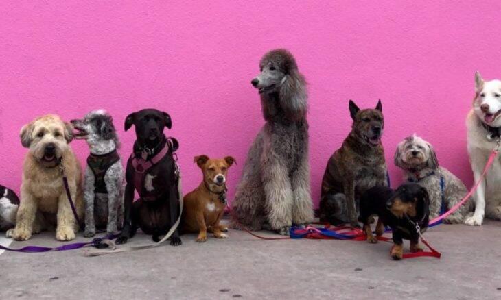 Saiba qual é a raça de cão mais bonita, de acordo com a ciência