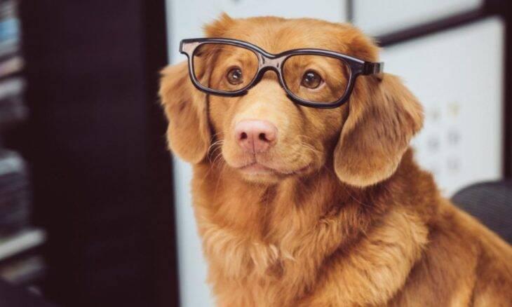 Cães aprendem novas palavras com rapidez impressionante, mostra estudo