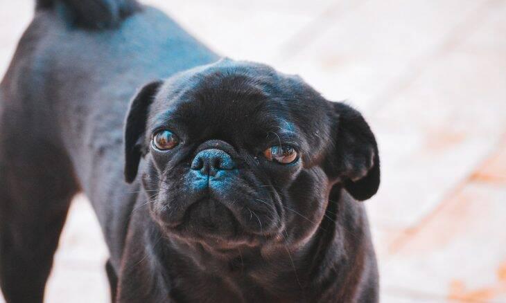 Mais de 100 cães morrem após comer ração que é objeto de recall