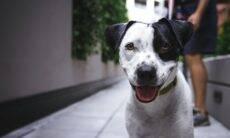 O que é melhor para o seu cão? Às vezes é melhor deixar ele decidir