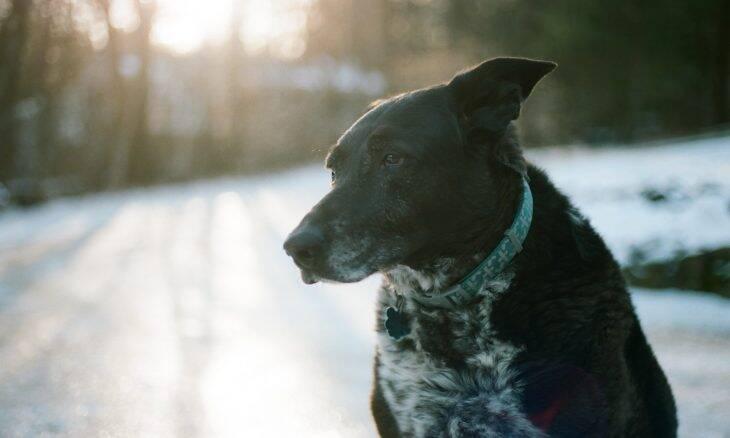 7 maneiras de melhorar a vida do seu cão idoso