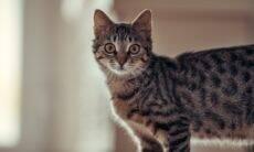 Seu gato mata outros bichinhos? A ciência descobriu um jeito de combater esse hábito