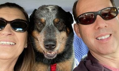 Cão que guardou o dono morto na neve está de casa nova e convive com mulher que se trata de câncer