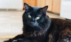 Com essas dicas, seu gato terá uma vida mais longa e feliz