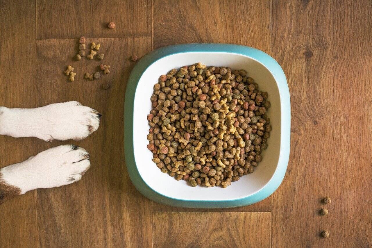 Horário, quantidade, quantas vezes ao dia? Tire suas dúvidas sobre a alimentação do seu cão