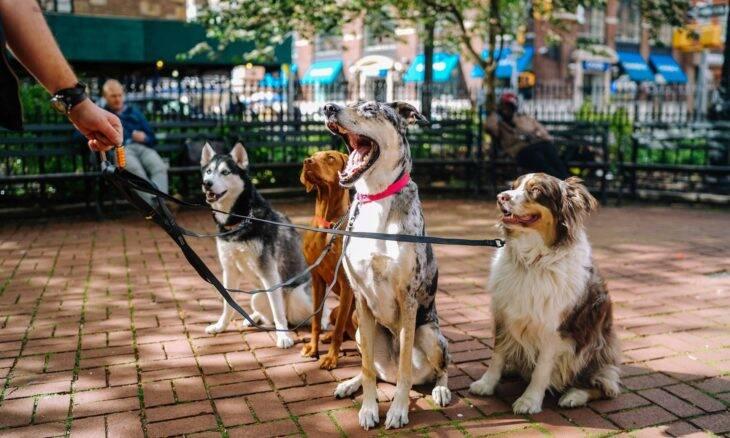 Já pensou em ser um passeador de cães profissional? Veja como começar