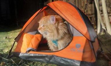 Conheça gatos aventureiros que adoram andar de caiaque, acampar e até surfar