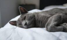 Seu gato tem mania de dormir na ponta da cama? Saiba por quê