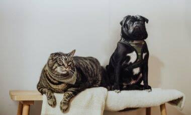 Pesquisa mostra quais países preferem cães ou gatos; veja o resultado no Brasil