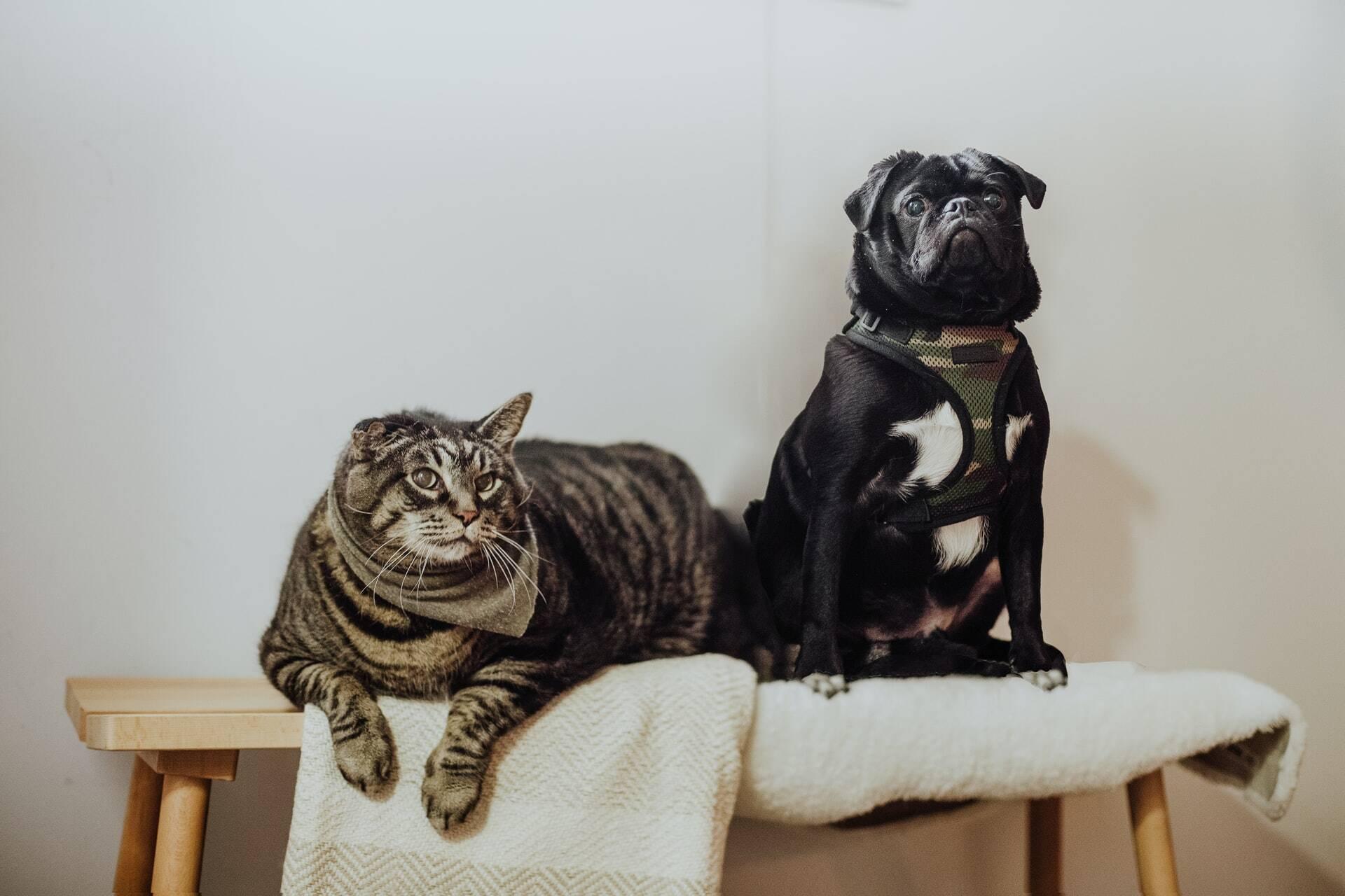 Mitos e verdades sobre cães e gatos