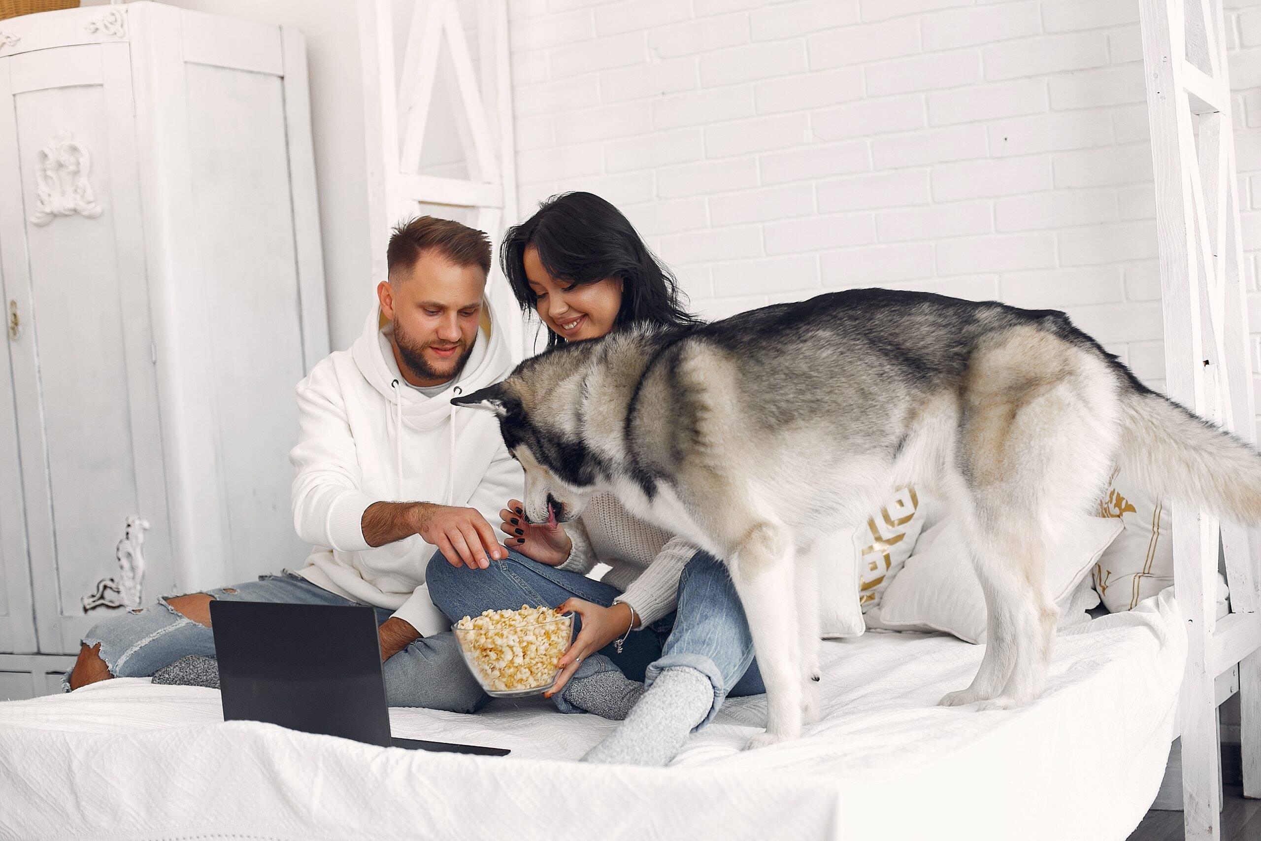 Cães podem comer pipoca? Veja o que os veterinários têm a dizer