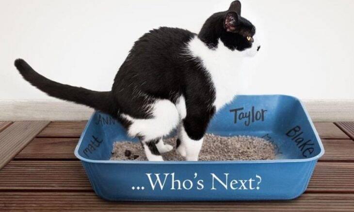 Para curar corações partidos, abrigo nos EUA oferece gatos que fazem cocô no nome do ex