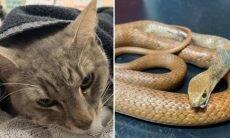 Gato morre ao defender a sua família contra cobra venenosa