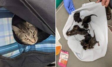 Esquadrão antibomba é chamado para desarmar artefato e encontra ninhada de gatos
