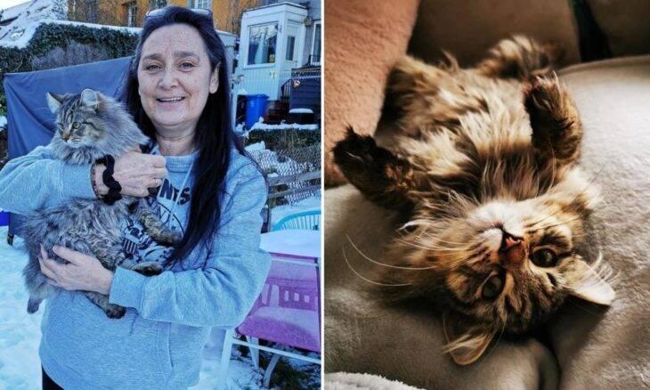 Bombeiros são obrigados a cortar rabo de gato preso em sofá