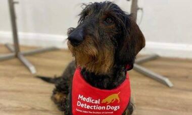 Cães diagnosticam câncer de próstata e estão 'ensinando' máquinas a fazerem o mesmo