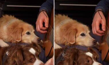 Vídeo: cães acompanham atentamente o dono tocando violão e viralizam