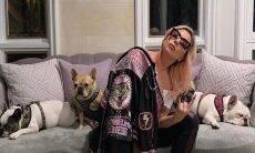 Roubaram os cães da Lady Gaga, e ela oferece R$ 2,7 milhões pra quem encontrá- los