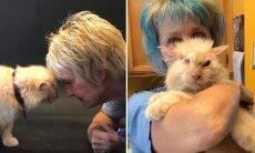 Mulher monta abrigo para cuidar de gatos velhos, doentes e à beira da morte
