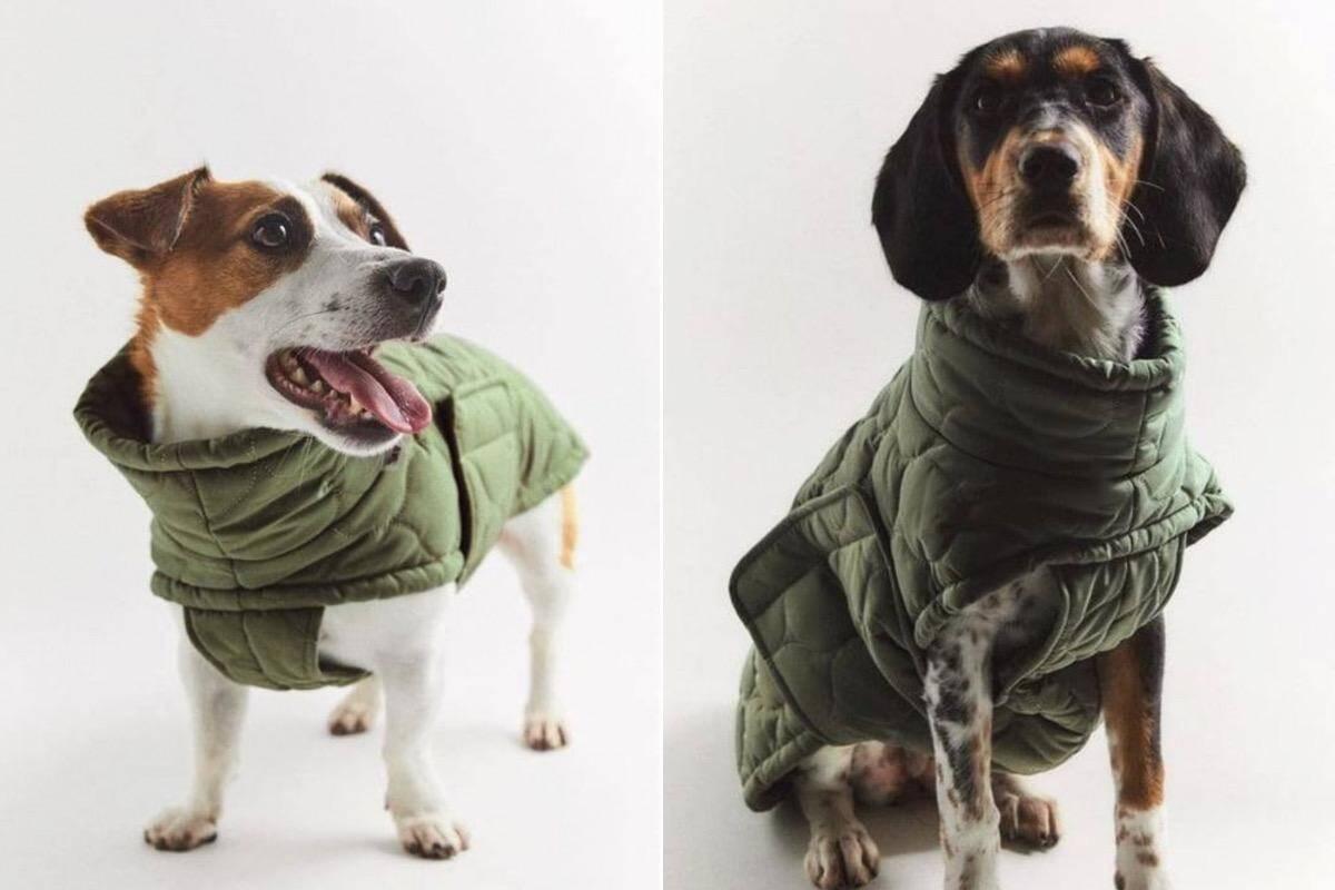 Zara lança linha de roupas para cães