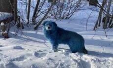 Mistério: Matilha de cães azuis é flagrada na Rússia