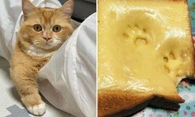 Fotos e vídeos: confira os 20 tuítes mais hilários de cães e gatos da semana