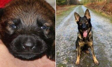 Em vídeos, policial registra o crescimento de cães que serão treinados para integrar a tropa