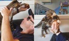 Vídeo: Gato 'viciado' em muffin não deixa cliente de cafeteria comer sossegado