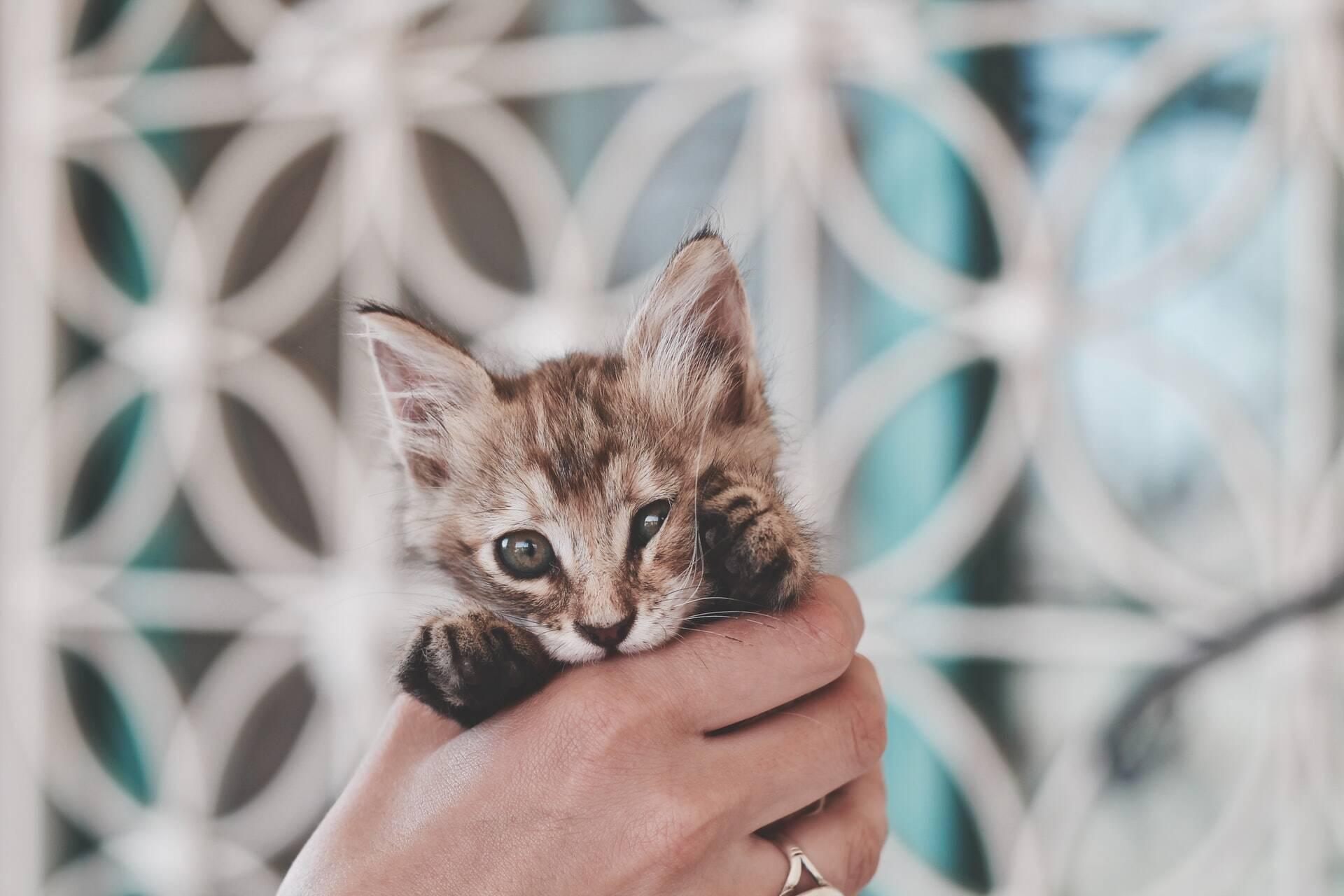 Não sabe que nome dar ao seu gato? Inspire-se nesta lista com personagens famosos