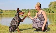 O cão é o melhor amigo... da mulher, indica estudo