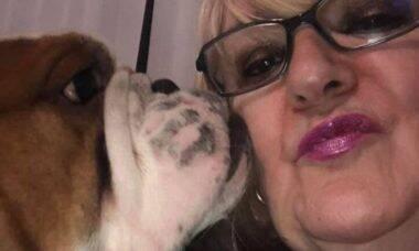 Mulher é multada em mais de R$ 15 mil por cães que não param de latir