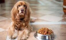 Empresa procura cães gourmets para testar rações e paga R$ 786 por mês