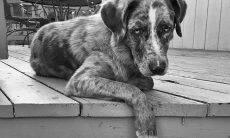Homem é acusado de arrancar o coração de um cão para afastar demônios de casa