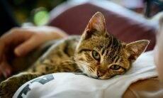 Donos de gatos são mais espertos que os de cães, diz estudo