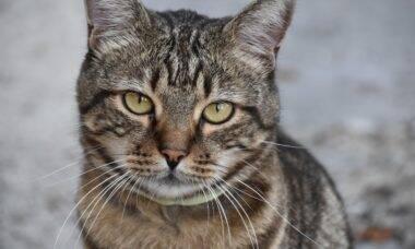 Confira os sinais de que o seu gato está feliz... ou não