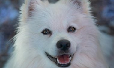 Especialistas dão 4 dicas infalíveis para melhorar o humor do seu pet