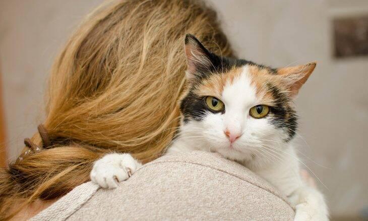 Grávidas jamais devem limpar a caixa de areia dos gatos; veterinária explica por quê