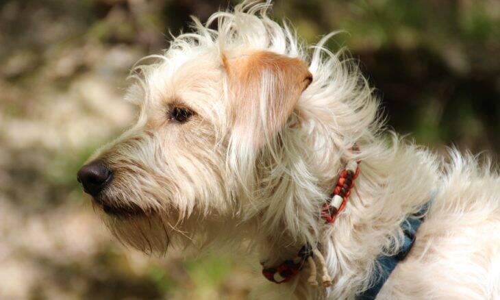 Coleira antipulgas seria responsável pela morte de 1.700 pets, diz agência