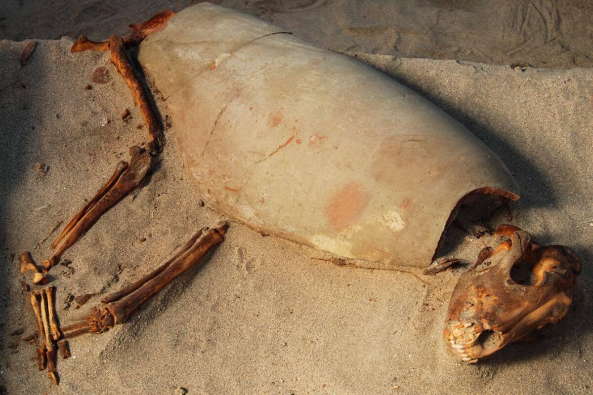 Arqueólogos descobrem o que pode ser o cemitério de pets mais antigo do mundo