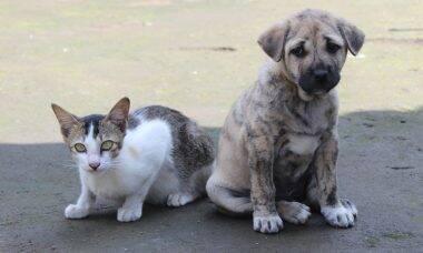 Confira 25 raças de gatos que convivem bem com cães