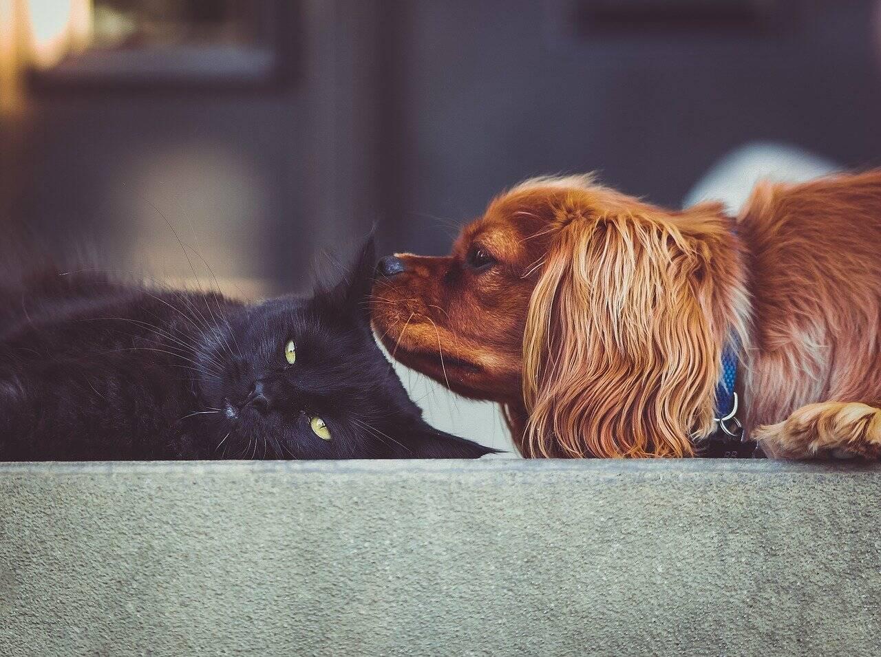 Aprenda a identificar quando um cão ou gato está com dor