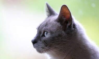 Conheça o gato que se recuperou milagrosamente após ser atingido por caminhão