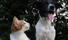 E-book gratuito reúne dicas para manter cães e gatos saudáveis