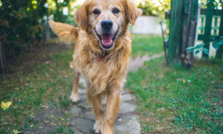 Deixe esses 10 mitos de lado e adote seu próximo cão sem medo