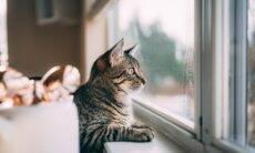 Meu gato vive querendo sair de casa, tudo bem se eu deixar?