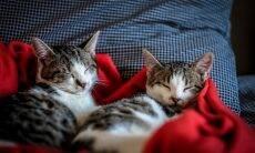 10 dicas para quem tem (ou quer ter) mais de um gato em casa