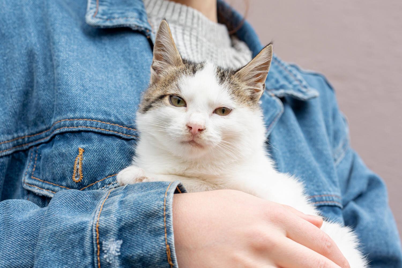 Gatos reconhecem a voz dos donos, mas não estão nem aí, diz estudo