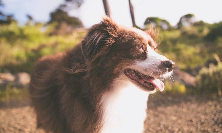 Domesticação dos cães aconteceu em uma caverna na Alemanha, há 16 mil anos, indica estudo