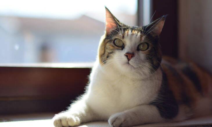 Seu gato gosta de ficar na janela? Cuidado, ele pode sofrer queimaduras