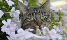 Veterinários alertam: lírios podem matar o seu gato